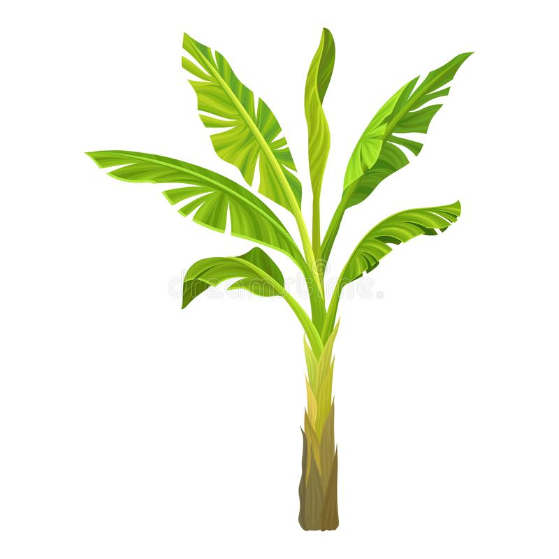 Ilustração dos desenhos animados da palma da banana Árvore com as folhas verde-clara grandes Planta tropical Elemento do projeto  ilustração stock
