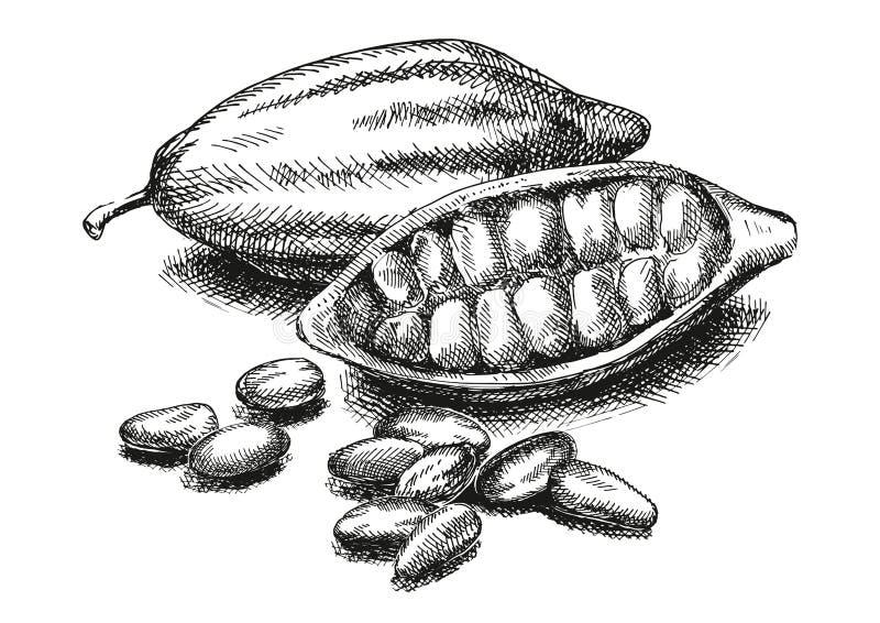 Ilustração dos feijões de cacau versão imagem de stock royalty free