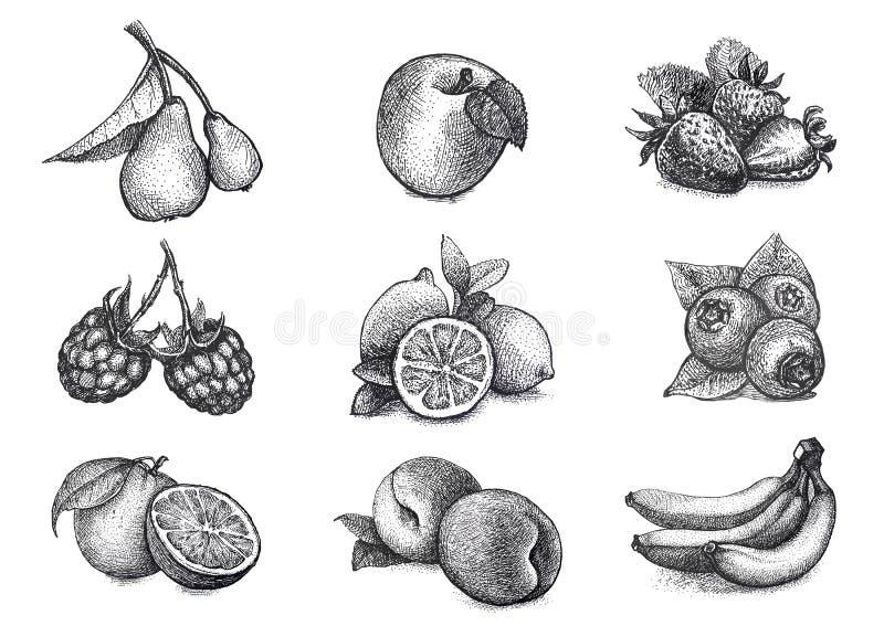 Ilustração dos frutos e das bagas no technicue da gravura do vintage foto de stock royalty free