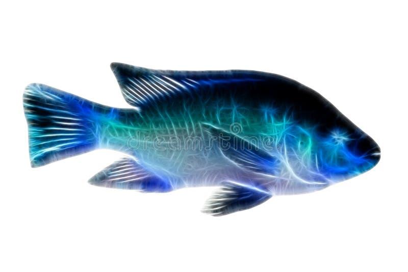 Ilustração dos peixes do Tilapia fotos de stock royalty free
