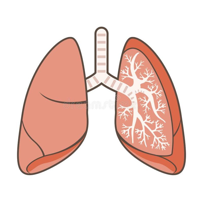 Ilustração dos pulmões ilustração stock