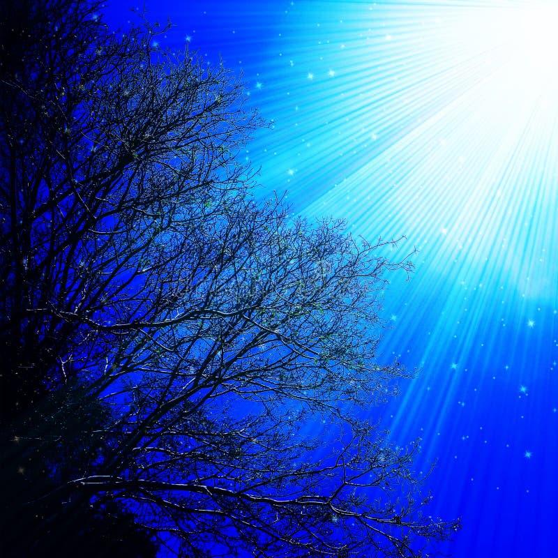 Ilustração dos raios claros de ramos de árvore do céu imagens de stock royalty free