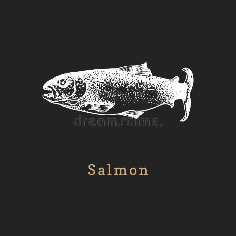Ilustração dos salmões no fundo preto Esbo?o dos peixes no vetor Marisco tirado em gravar o estilo para a etiqueta etc. da loja ilustração stock