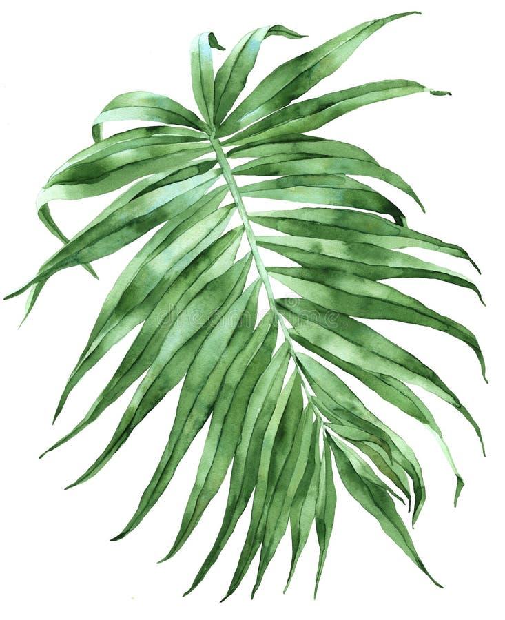 Ilustração em folha de palmeira verde imagem de stock
