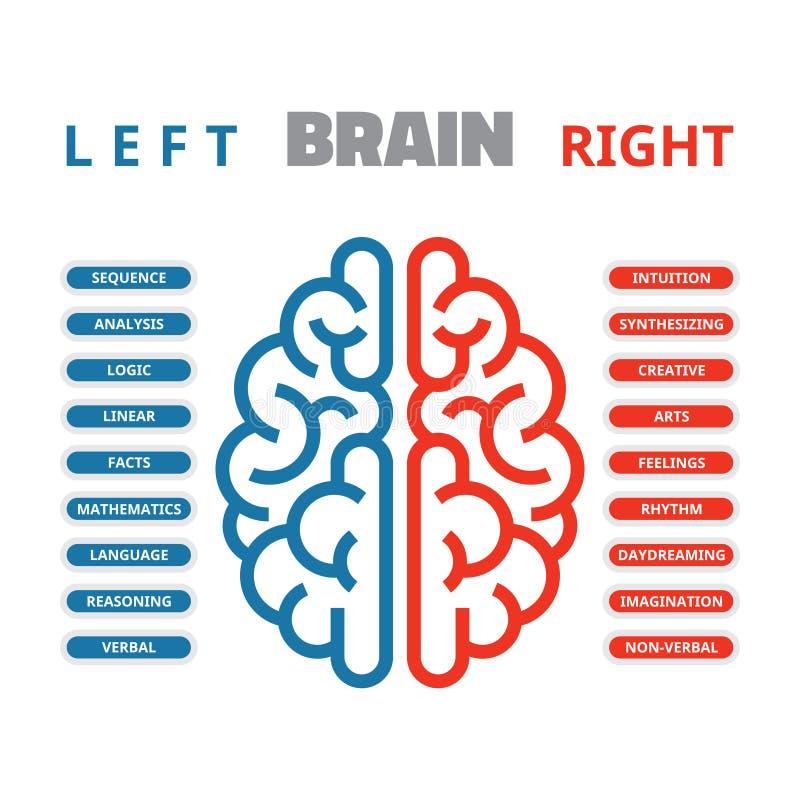 Ilustração esquerda e direita do vetor do cérebro humano Cérebro humano esquerdo e direito infographic ilustração do vetor