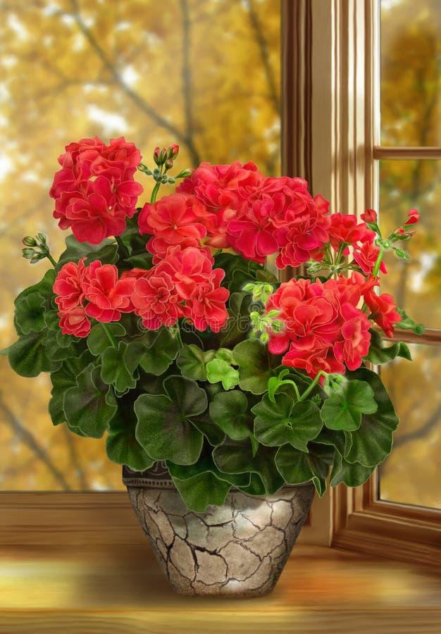 Ilustração, flor do gerânio em um potenciômetro no fundo da janela outono foto de stock