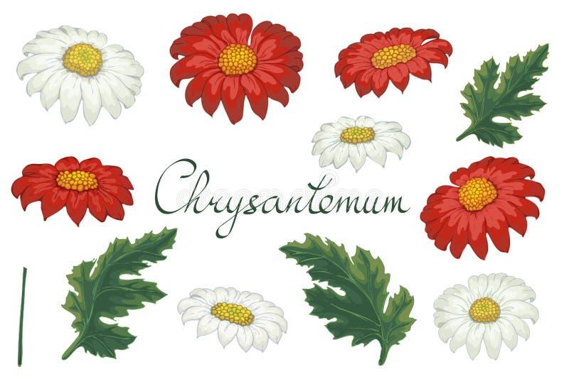 Ilustração floral do vetor com crisântemo Elementos isolados em um fundo branco Dourado-margarida vermelha e branca para seu flor ilustração royalty free