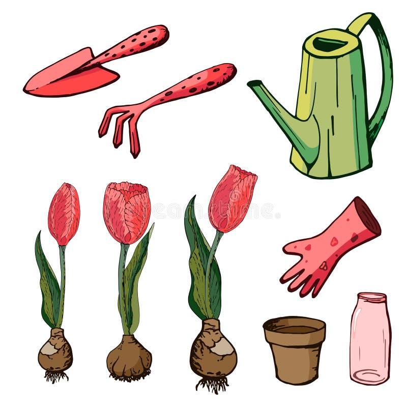 Ilustração floral do vetor com tulipas ilustração royalty free