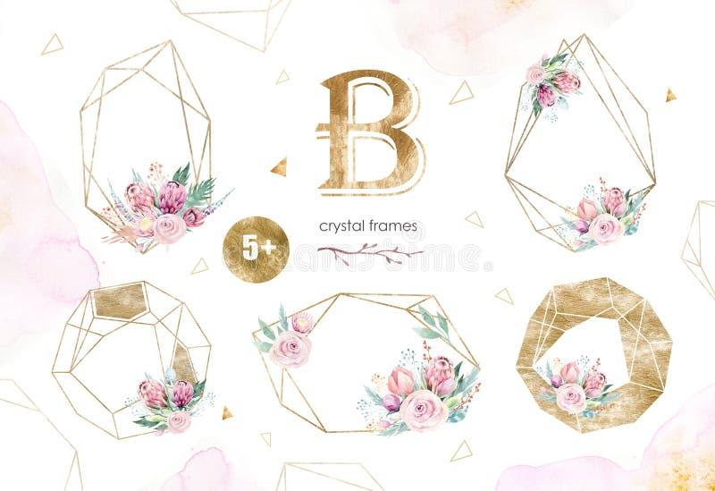 Ilustração floral isolada desenho da aquarela da mão com rosa, folhas, ramos e flores do protea Ouro boêmio ilustração royalty free