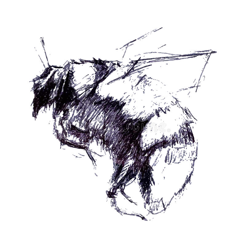 Ilustração gravada vintage do zangão O vetor do desenho da mão expande ilustração do vetor