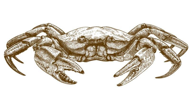 Ilustração gravura a água-forte do caranguejo ilustração do vetor