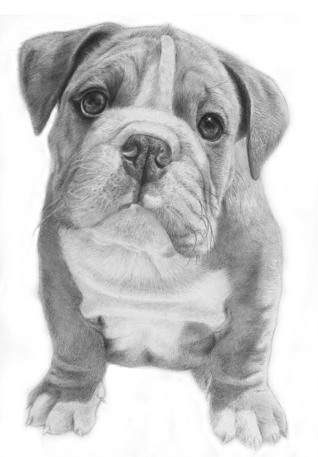Ilustração hand-drawn do buldogue bonito ilustração royalty free