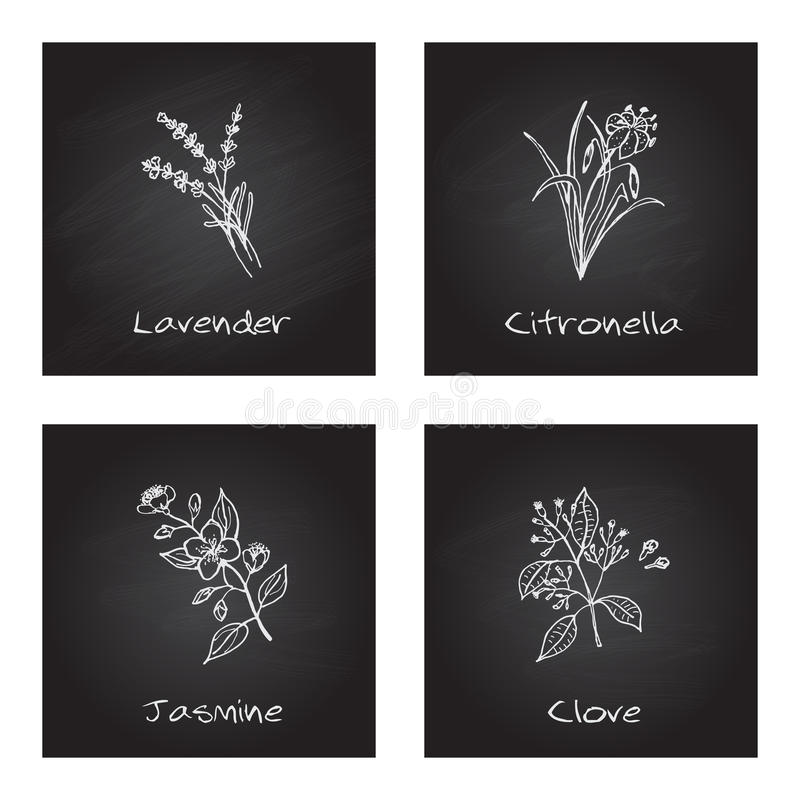 Ilustração Handdrawn - grupo da saúde e da natureza ilustração royalty free
