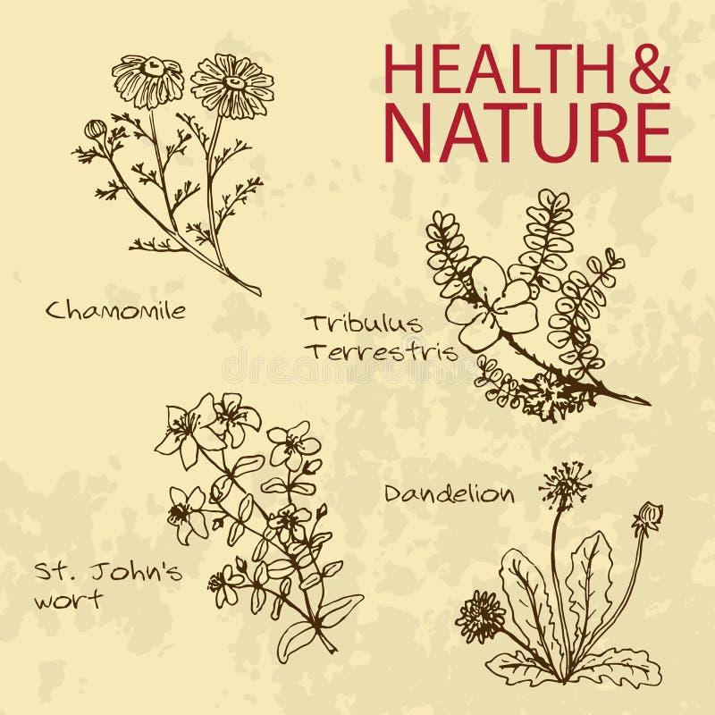 Ilustração Handdrawn - grupo da saúde e da natureza ilustração do vetor