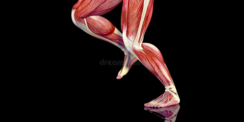 Ilustração humana da anatomia do corpo masculino de um basculador humano com músculos visíveis ilustração do vetor