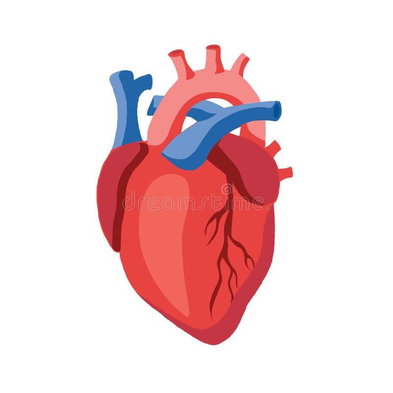 Ilustração humana do ícone do coração ilustração royalty free