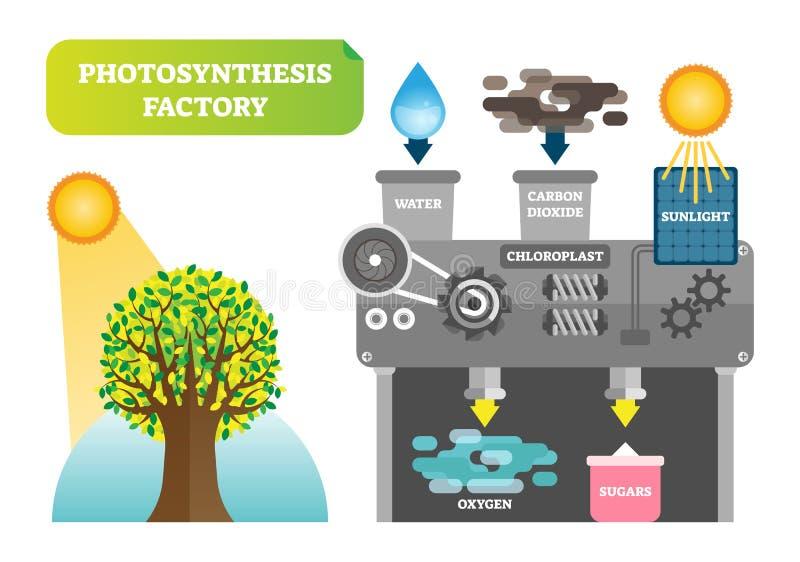 Ilustração infographic do vetor da fábrica da fotossíntese para a natureza limpa ilustração do vetor
