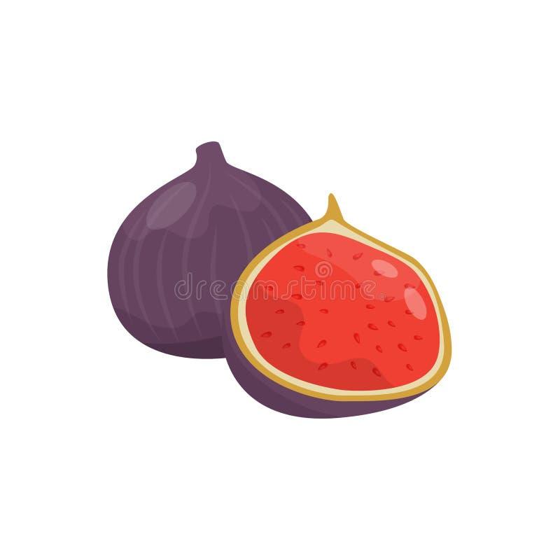 Ilustração inteira e meia do fruto do figo do vetor em um fundo branco ilustração stock