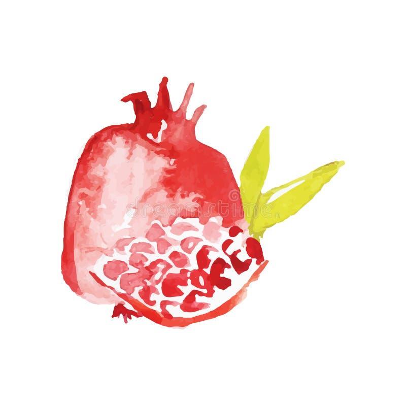 Ilustração madura suculenta do vetor da pintura da mão da aquarela do fruto da romã ilustração do vetor