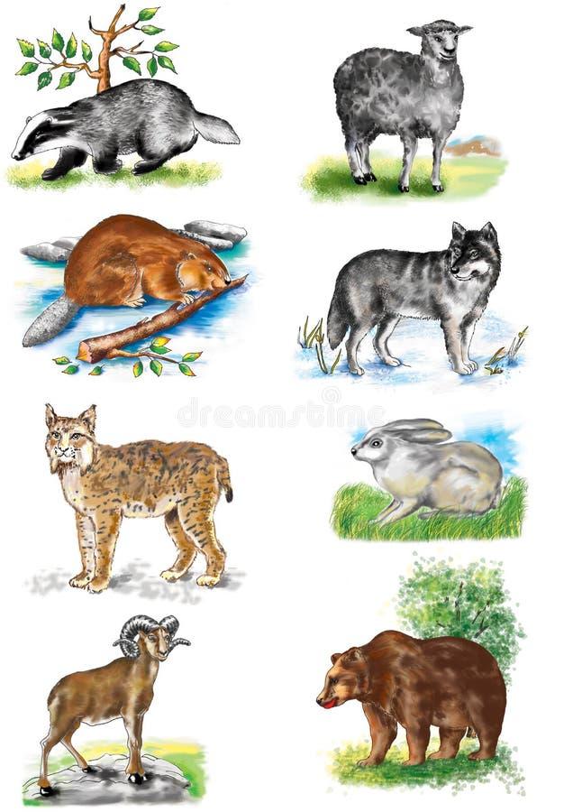 Ilustração Os animais carregam Carneiros Lobo hare lynx texugo ram castor ilustração do vetor