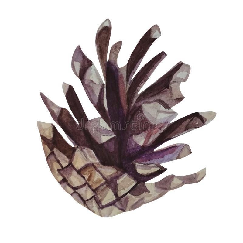 Ilustração pintado à mão da aquarela do cone do pinho marrom foto de stock royalty free