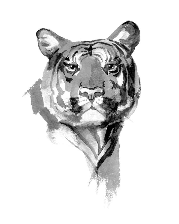 Ilustração pintado à mão da aquarela do tigre branco isolada ilustração do vetor