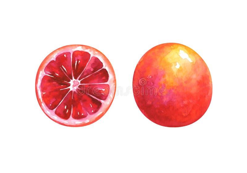 Ilustração pintado à mão da aquarela da fatia e da laranja pigmentada inteira ilustração stock