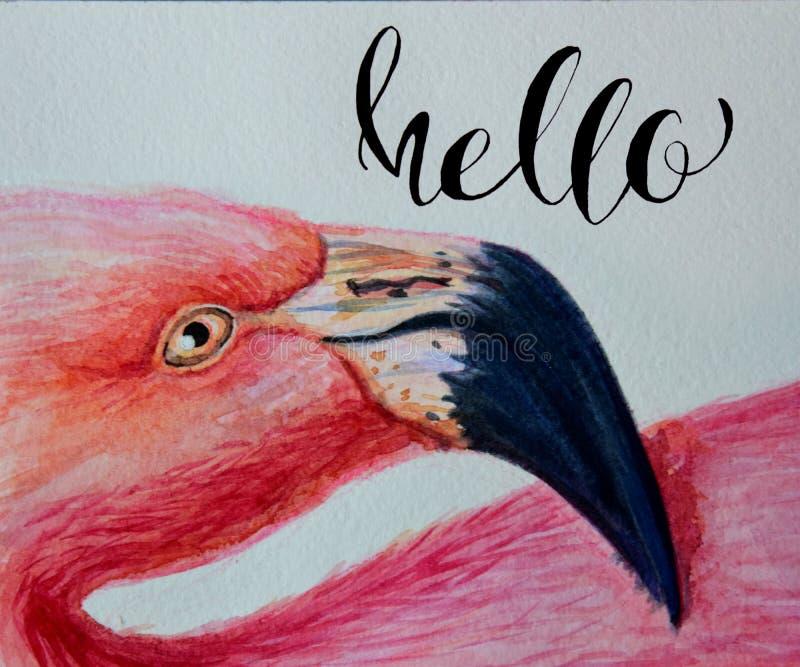 Ilustração pintado à mão do rosa do flamingo da aquarela com rotulação da inscrição olá! cópia da arte do retrato do perfil do pá ilustração do vetor