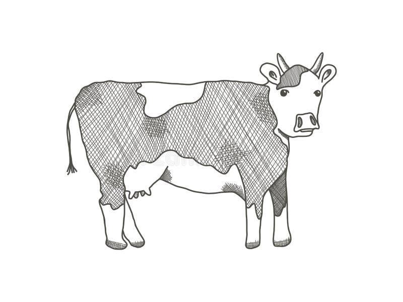 Ilustração preta da vaca do esboço no fundo branco ilustração do vetor