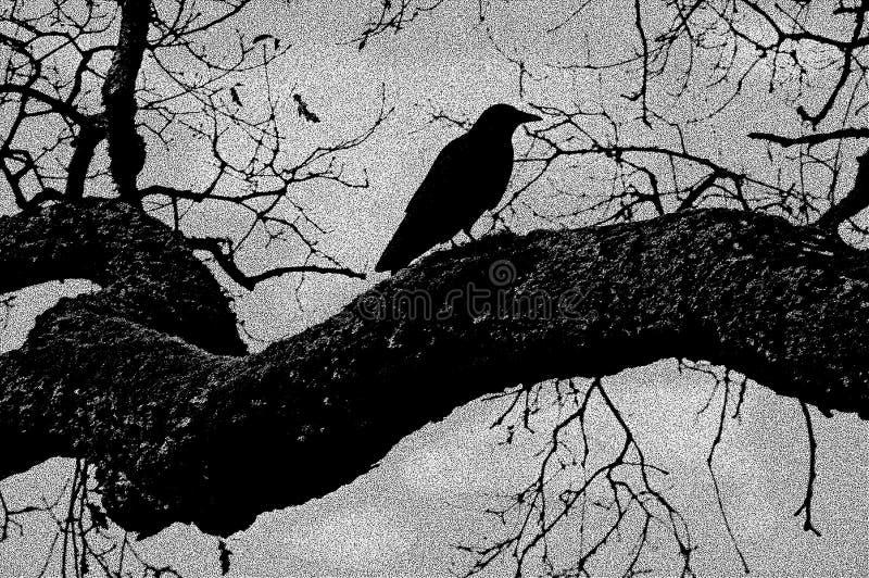 Ilustração preta do corvo ilustração stock