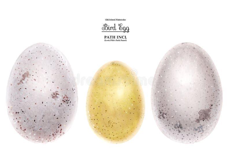 Ilustração realística da aquarela, ovos ilustração do vetor