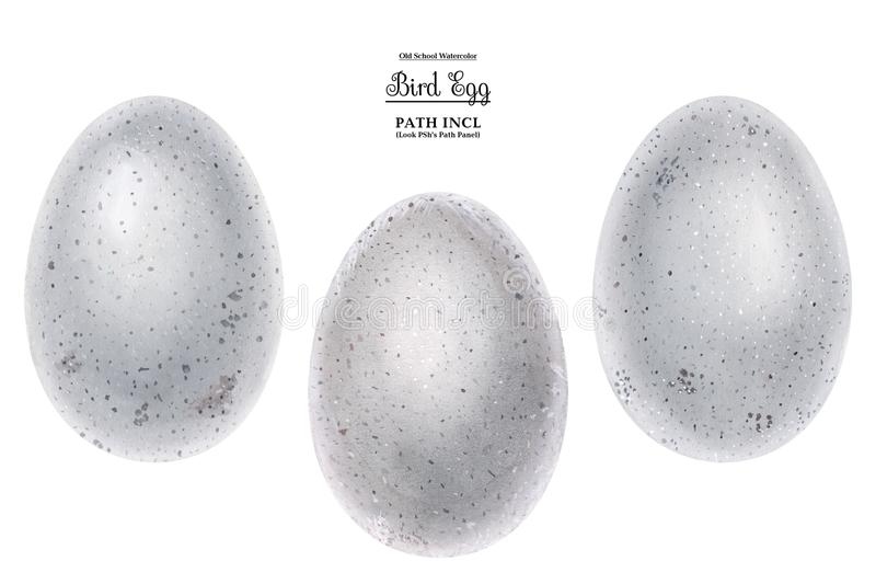 Ilustração realística da aquarela, ovos ilustração stock