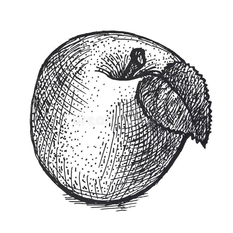 Ilustração realística da maçã na técnica da gravura do vintage fotografia de stock