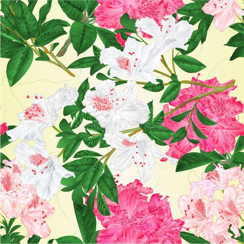 Ilustração sem emenda do vetor do vintage do arbusto da montanha dos rododendros das flores dos ramos rosa e branco da textura ed ilustração do vetor