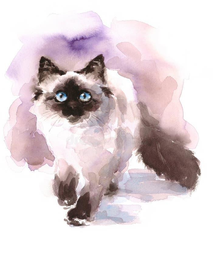 Ilustração Siamese dos animais de estimação dos animais de Ragdoll Cat Walking Looking Up Watercolor pintado à mão ilustração do vetor
