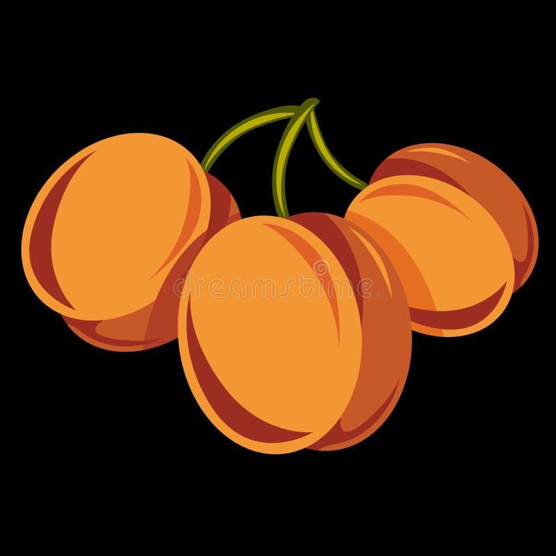 A ilustração simples do alimento biológico do vegetariano, três vector s maduro ilustração do vetor
