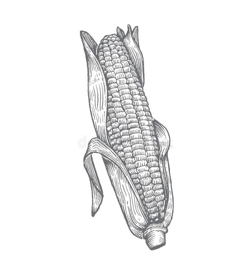 Ilustração superior do milho do bloco xilográfico do vetor imagens de stock