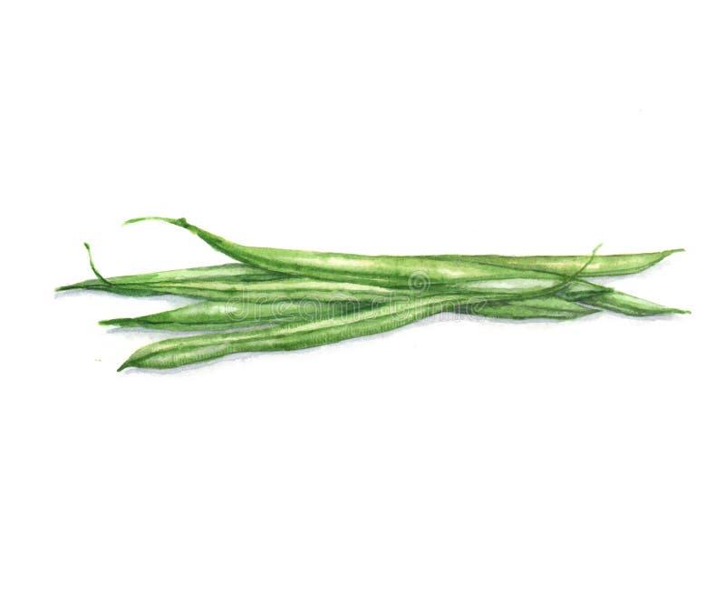 Ilustração tirada mão da aquarela do alimento: feijões de aspargo fotografia de stock royalty free