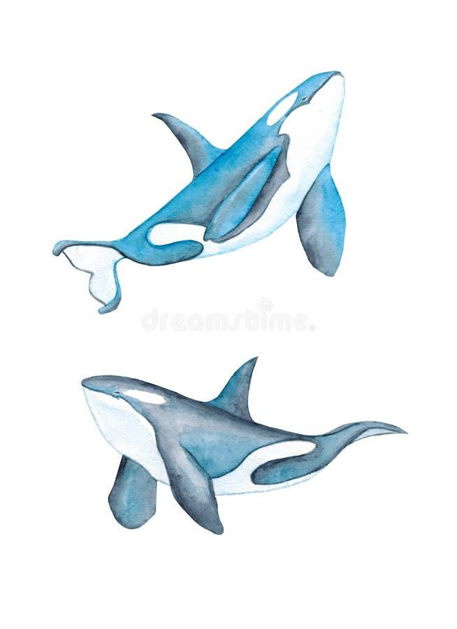 A ilustração tirada mão da aquarela do azul de oceano da baleia de assassino do golfinho dos animais de mar das baleias isolou-se ilustração royalty free