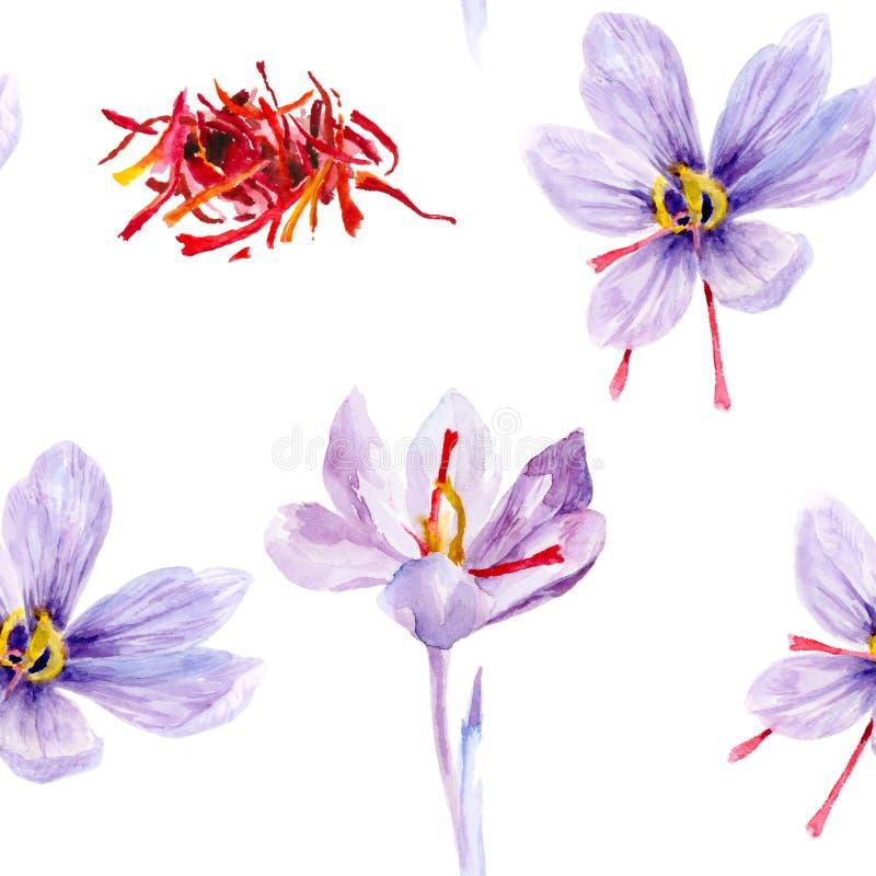 Ilustração tirada mão da aquarela da flor do açafrão de açafrão ilustração royalty free