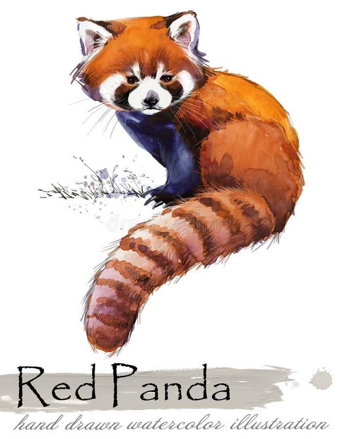 Ilustração tirada mão da aquarela da panda vermelha ilustração do vetor