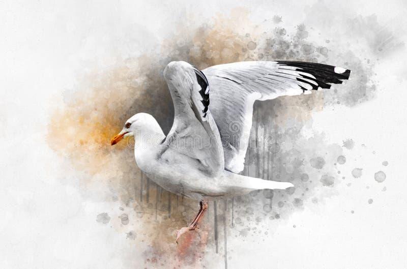 Ilustração tirada mão da gaivota da aquarela Ilustra??o do p?ssaro ilustração royalty free