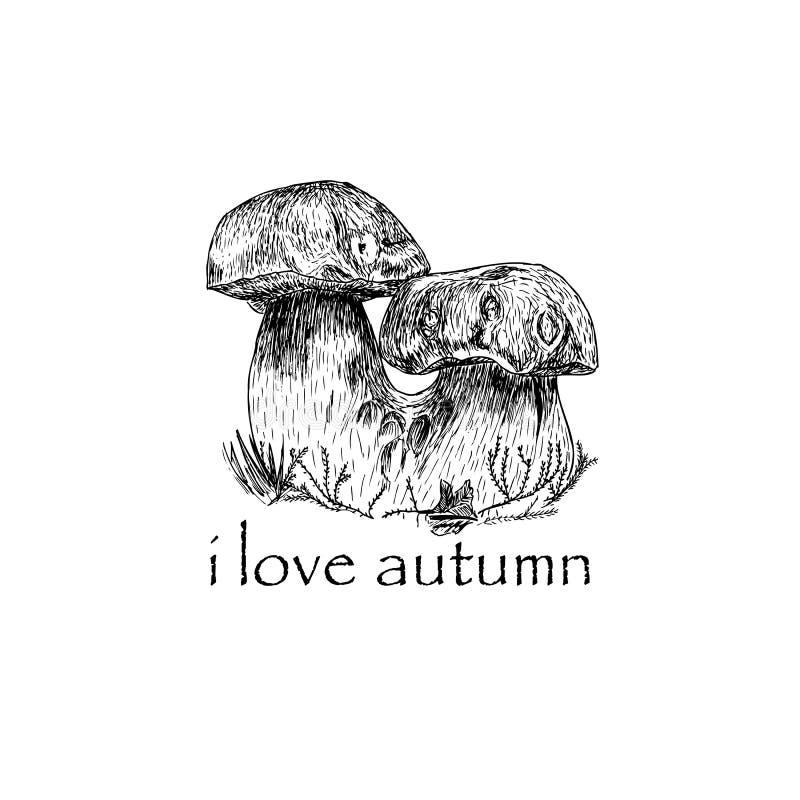 Ilustração tirada mão do esboço do cogumelo no fundo transparente foto de stock royalty free
