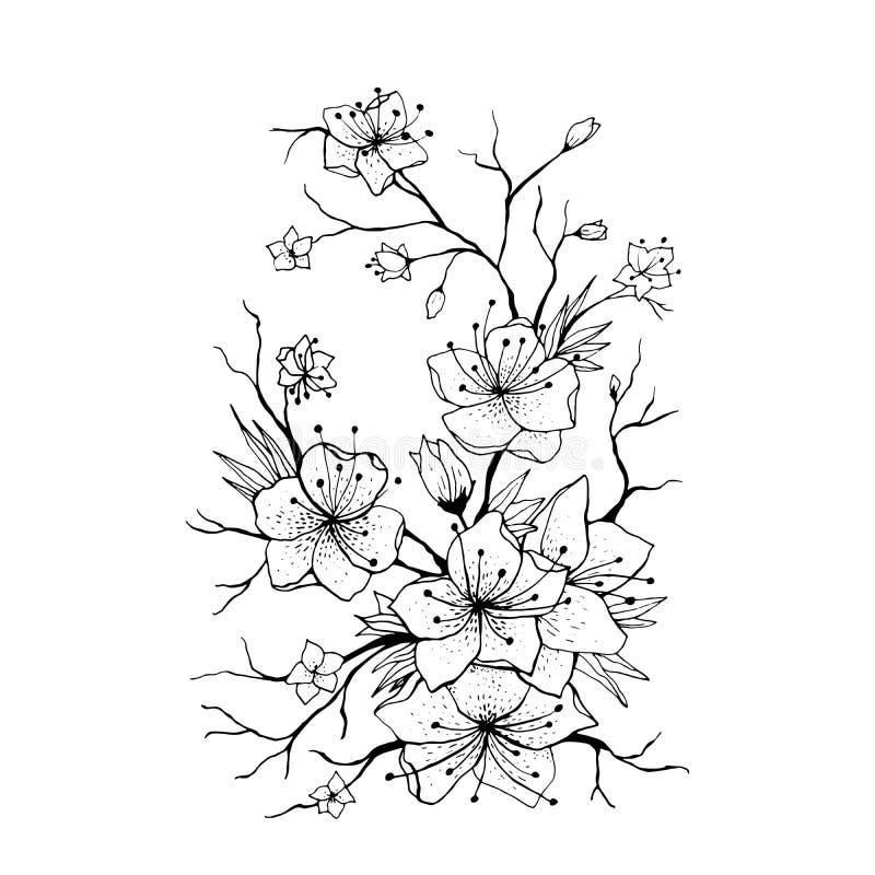 Ilustração tirada mão do ramo de Sakura ilustração royalty free