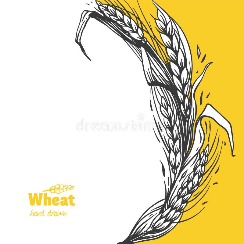 Ilustração tirada mão do vetor do galho do trigo ilustração royalty free