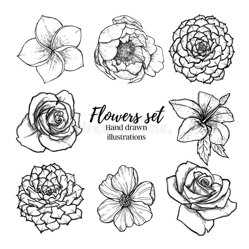 Ilustração tirada mão do vetor - a planta carnuda ajustada flores, aumentou, p ilustração do vetor