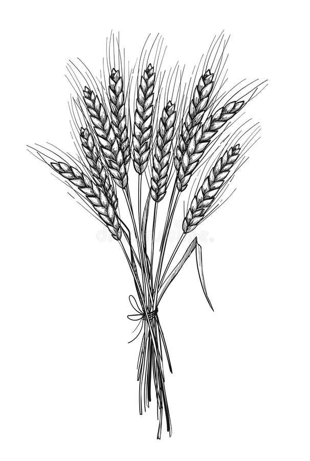Ilustração tirada mão do vetor - trigo Elementos tribais do projeto ilustração stock