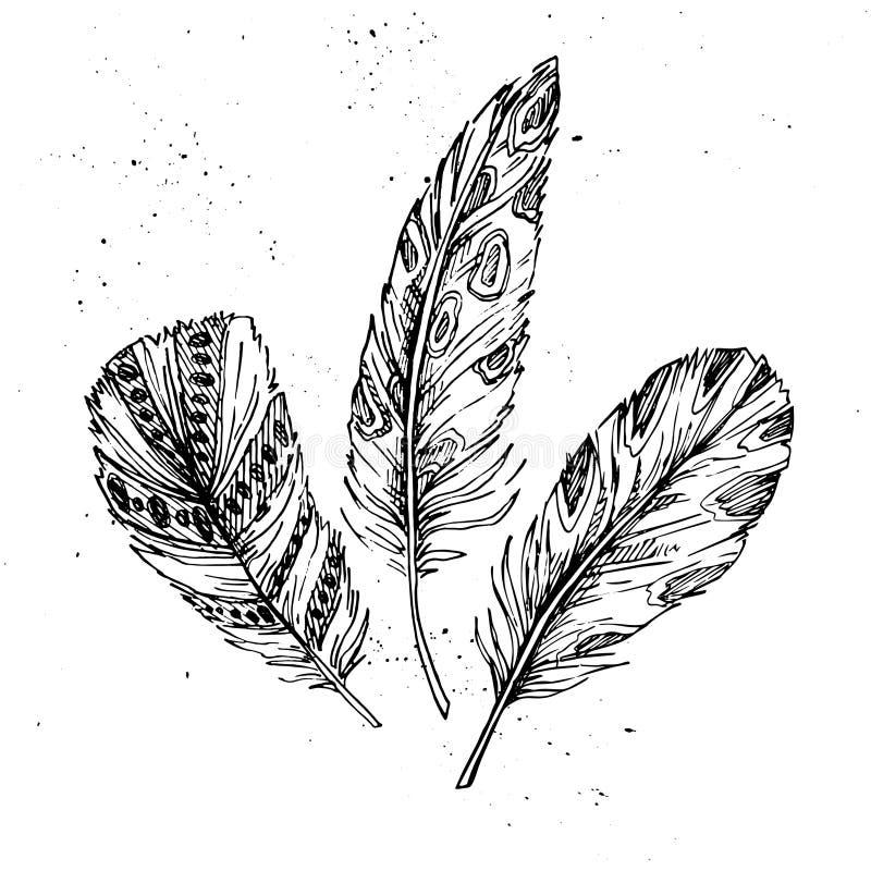 Ilustração tirada mão do vintage do vetor - penas ilustração stock