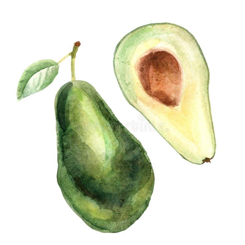 Ilustração tropical da aquarela com abacate em um fundo branco ilustração stock