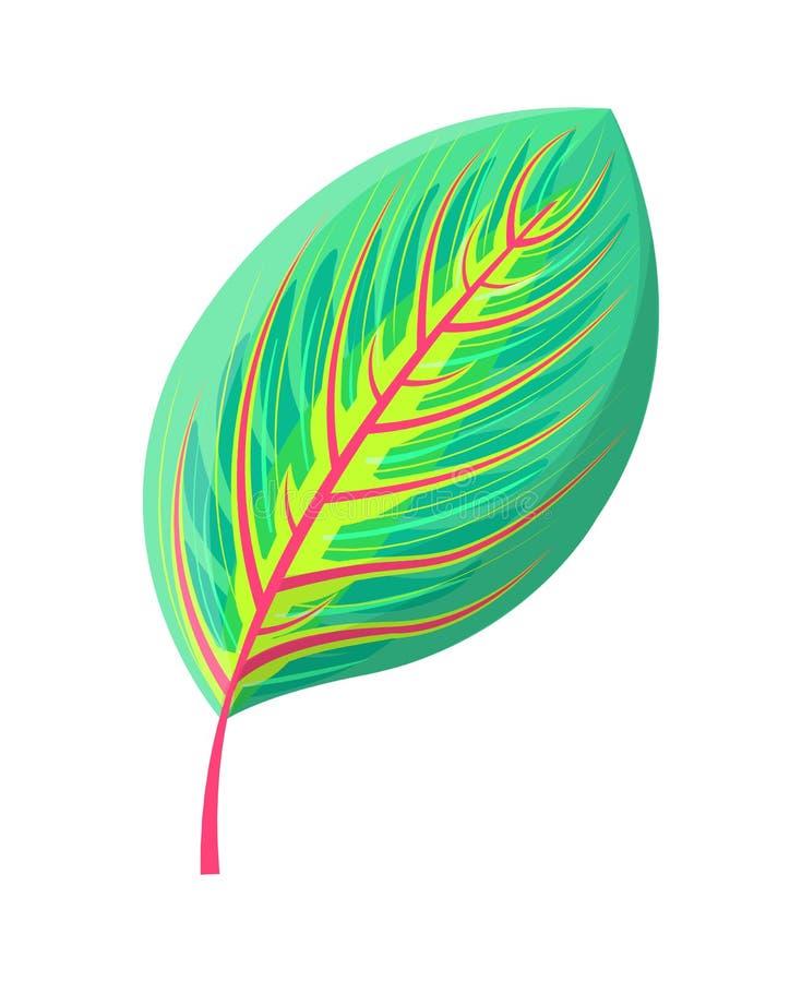 Ilustração tropical do vetor da folha de borracha da árvore de figo ilustração do vetor